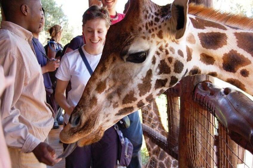 Girraffee timeGiraffe center Half-Day David Sheldrick Elephant Orphanage, Giraffe Center, and Karen Blixen Museum Tour from Nairobi