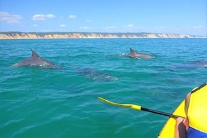 Half-Day Kayak with Dolphins and 4x4 Beach Drive from Rainbow Beach