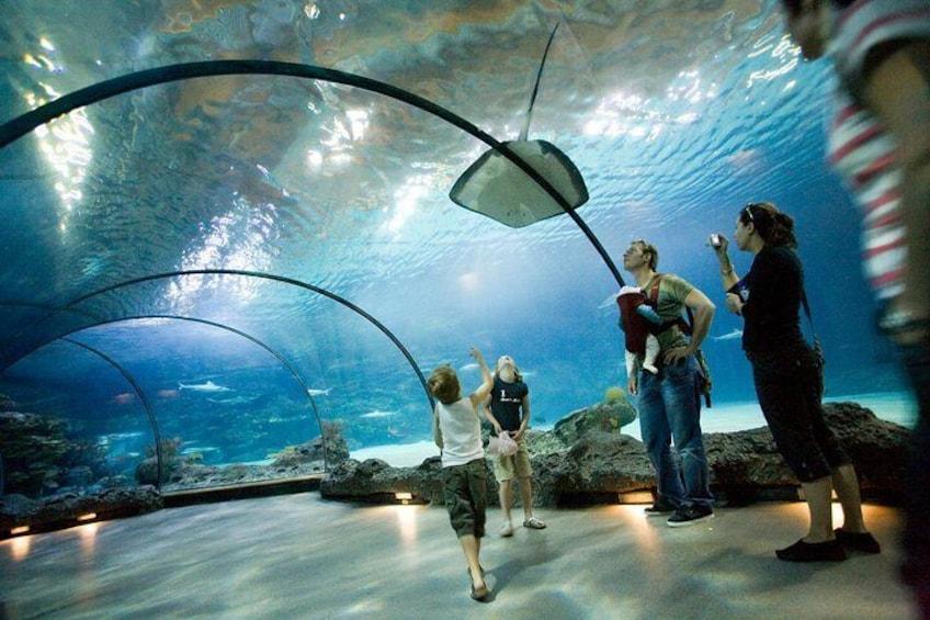 Oceanium - aquarium