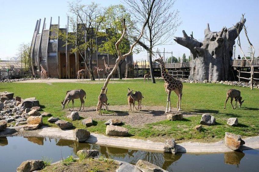 Rotterdam Zoo Diergaarde Blijdorp Direct Entrance Ticket
