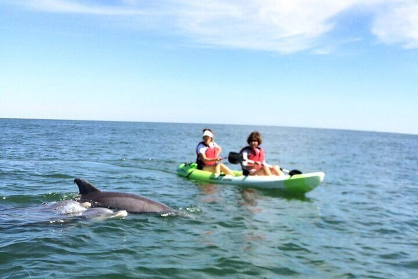 Small Group Dolphin Kayak Eco-Tour