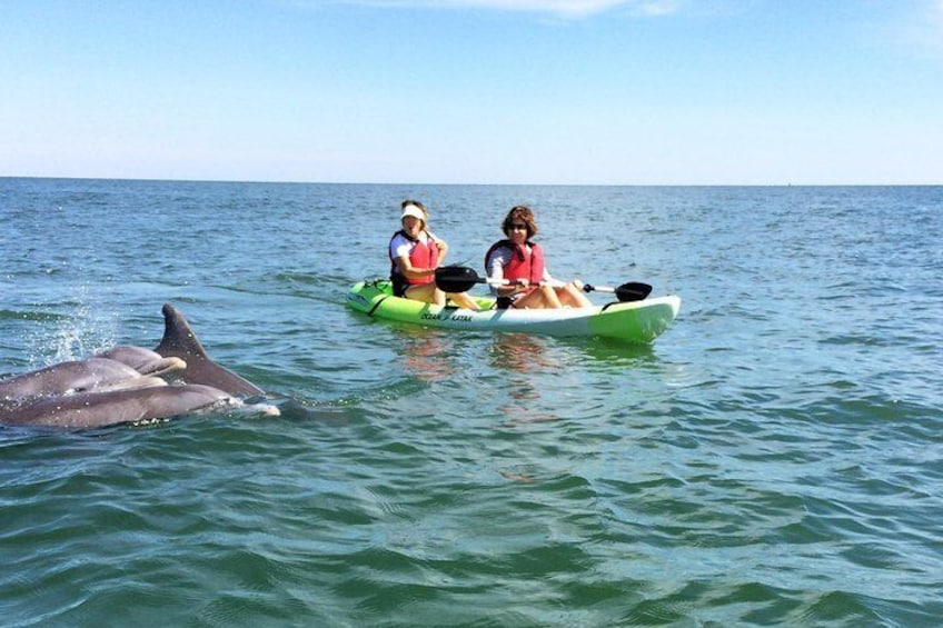 Family of Dolphins Saying Hello to our Kayakers