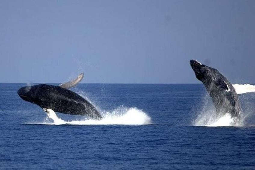 Show item 5 of 8. Whale-Watching Cruise from Newport Beach