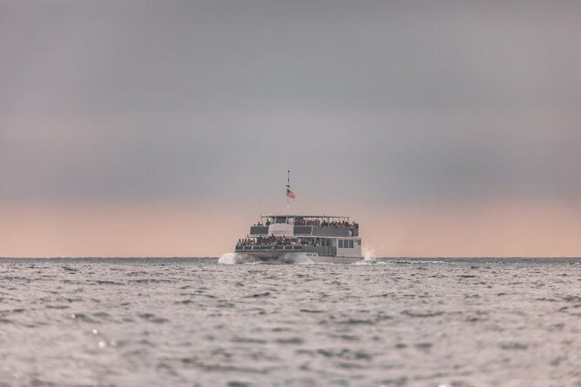 Show item 3 of 7. Whale-Watching Cruise from Newport Beach