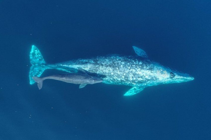 Whale-Watching Cruise from Newport Beach