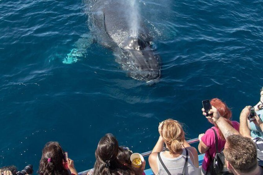 Show item 1 of 8. Whale-Watching Cruise from Newport Beach