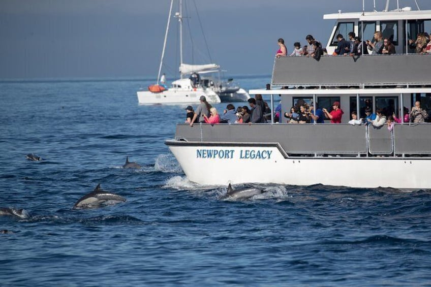 Show item 5 of 8. Whale Watching Cruise
