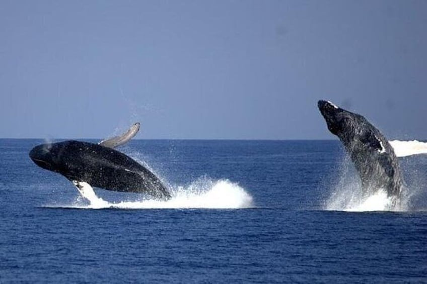 Show item 2 of 7. Whale-Watching Cruise from Newport Beach