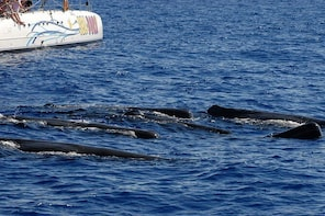 Seaborn catamaran dolphin and whale watching