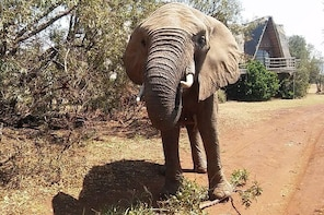 Walk with Elephants in their natural environment