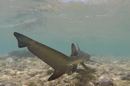 Safari Island Tour by 4X4! Visit Salt Lake, Blue Eye and walk with Lemon Sharks!