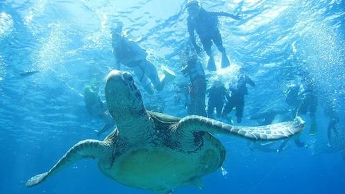 okinawa-blue-cave-snorkeling_aede37ed5fa024586a15b1157a6d5028244eb361.jpg