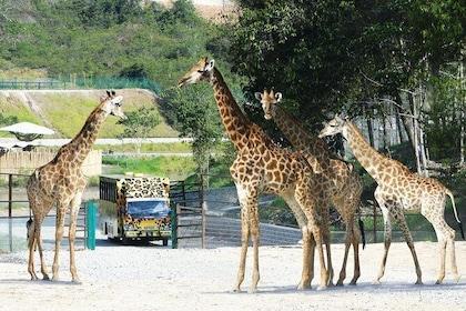 Bukit Gambang Safari Park Admission Ticket