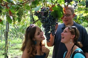 Mt. Vesuvius Wine Tasting and Lunch Experience from Pompeii