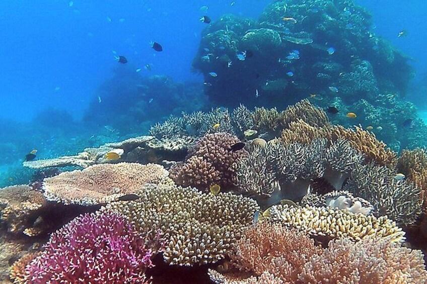Healthy, happy reef!