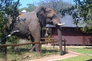 4 Day Kruger Park Tour