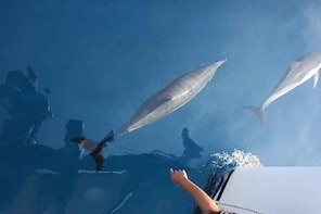 Dolphins Sighting Marbella