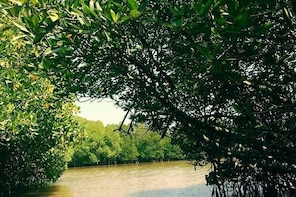 Trip to Visit Pichavaram Mangrove Forest and Chidambaram Nataraja Temple