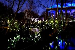 Klias Wetland Cruise & Fireflies - Small Group Tour