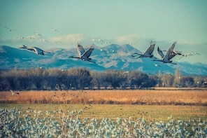 Bosque del Apache National Wildlife Refuge: An outdoor Paradise