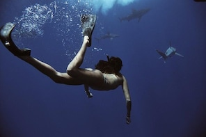 Swim with Sharks (cage-free)