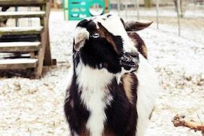 North Georgia Zoo and Farm Admission Pass