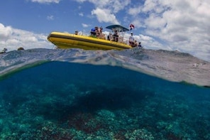 Waianae Coast Snorkel Cruise with Dolphin and Seasonal Whale Watching from ...