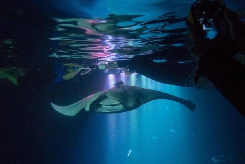 Manta Ray Night Snorkel from Kona
