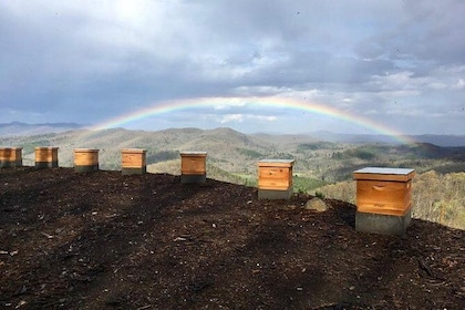 Rainbow over the bee yard - not photoshopped!