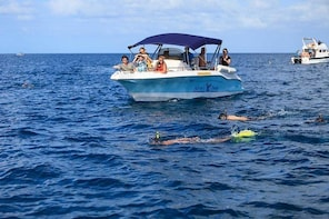 Swim with Dolphins - West Coast Mauritius