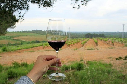 Napa Valley Wine Tasting Tours