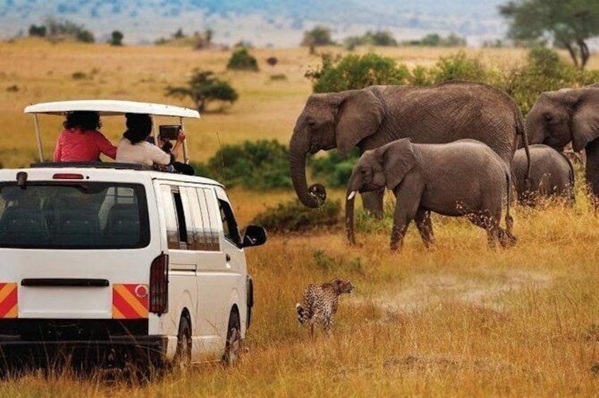 Private 8 Days Mombasa, Tsavo East, Amboseli, Naivasha & Masai Mara Safari