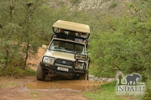 Scenic Sundowner Game Drive at Indalu Game Reserve