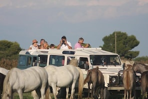 a unique experience in wild and authentic Camargue, a 4x4 safari