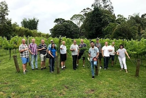 Full Day Mount Tamborine Winery Tour from Gold Coast