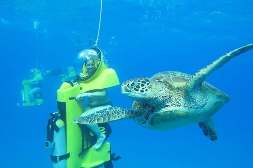 Show item 5 of 6. Get Up Close to Green Sea Turtles