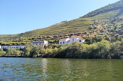 Full-day wine tasting tour to Douro Valley from Porto