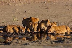 Nairobi National Park Game Drive Morning Safari Tour