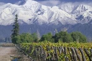 Full Day Tour: Culture of Wine in Mendoza