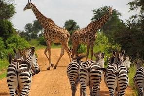 3 Days - MIKUMI NATIONAL PARK from Dar es laam