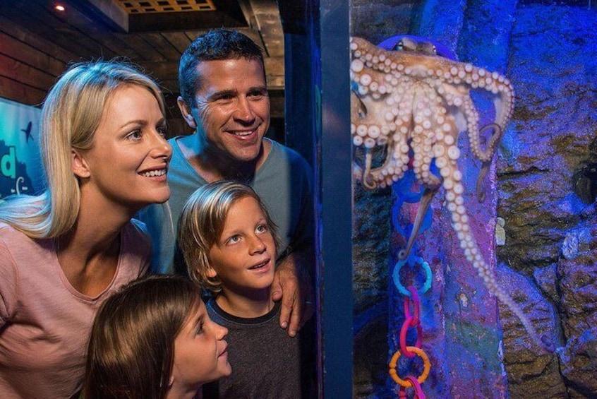 SEA LIFE Sunshine Coast Aquarium Entrance Ticket