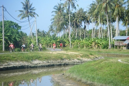 Half-Day Penang Countryside Cycling Tour