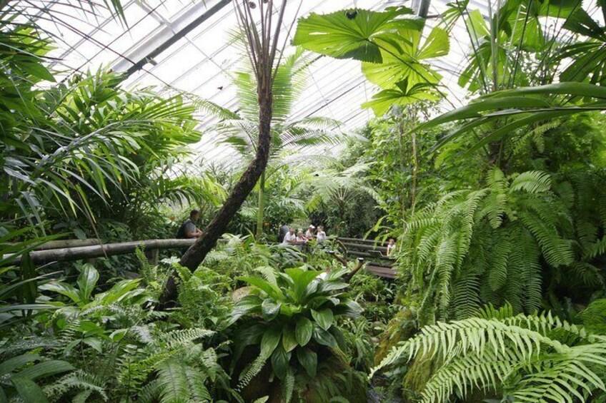 Rainforest Aviary