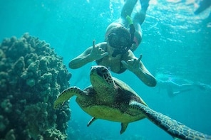 West Maui Half-Day Snorkel & Whale Watch from Ka'anapali Beach