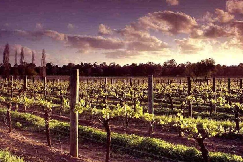 Upper Reach Winery: Swan Valley Winery and Vineyard Tour
