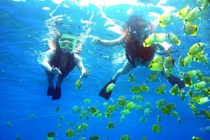 Guided Snorkel with Fish Tour at Wavebreak Island, Gold Coast