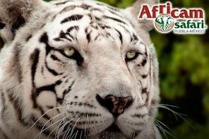 Africam Safari Zoo Admission with Transportation