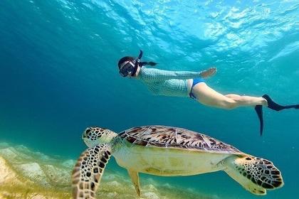 Snorkeling at Hikkaduwa