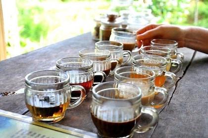 Best Of Bali Luwak Coffee Plantation Tours - Seminyak ...