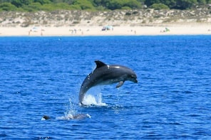 Private Tour - Dolphin & Whale Watching - Half Day